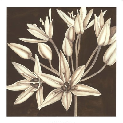 Sepia Lily IV Poster by Jennifer Goldberger for $37.50 CAD