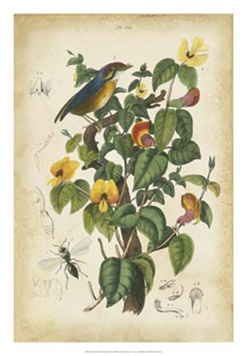 Antique Bird in Nature III Poster by Therese Guerin for $56.25 CAD