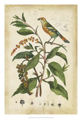 Antique Bird in Nature IV Poster by Therese Guerin for $56.25 CAD