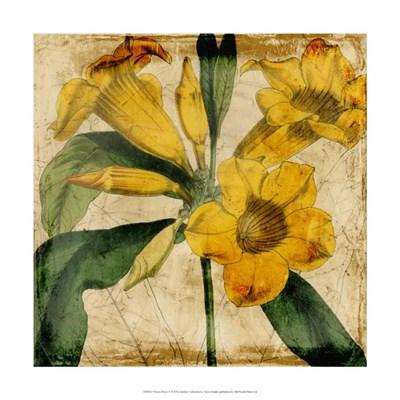 Vibrant Floral V Poster by Vision Studio for $31.25 CAD