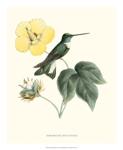 Hummingbird & Bloom I Poster by Mulsant & Verreaux for $50.00 CAD