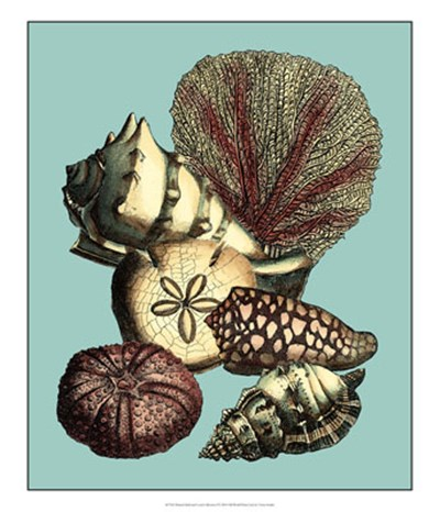 Printed Shell & Coral Collection I Poster by Vision Studio for $50.00 CAD
