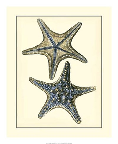 Antique Blue Starfish II Poster by Vision Studio for $50.00 CAD