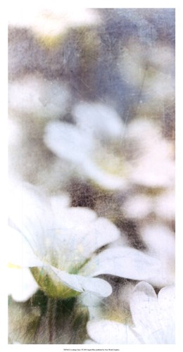 Looking Glass I Poster by Ingrid Blixt for $43.75 CAD