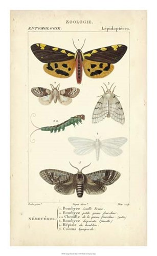 Antique Butterfly Study I Poster by Pierre Jean Francois Turpin for $50.00 CAD