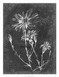 Slate Floral III
