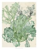 Seaweed Composition II