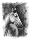 Charcoal Equestrian Portrait I