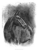 Charcoal Equestrian Portrait III