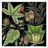 Graphic Botanical Grid III