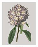 Floral Gems V
