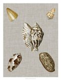 Shells on Linen I