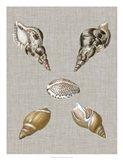Shells on Linen IV