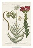 Botanical Varieties I
