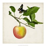 Fruit with Butterflies IV