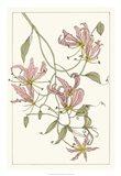 Botanical Gloriosa Lily II