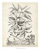 Scenic Botanical IV