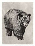 Pen & Ink Bear I