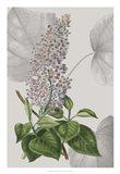 Botanical Arrangement IV