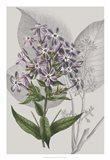 Botanical Arrangement VI