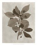 Arbor Specimen I