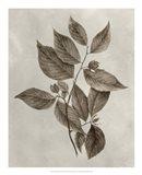 Arbor Specimen III