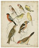 Non-Embellished Avian Gathering II