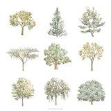 Tree Varieties I