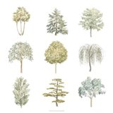 Tree Varieties II