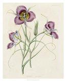 Lavender Blooms I