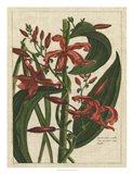 Botanical Study on Linen III