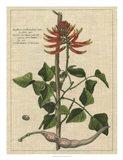 Botanical Study on Linen IV
