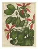 Botanical Study on Linen VI
