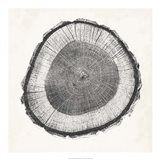 Tree Ring II
