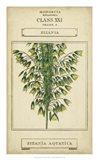 Linnaean Botany I