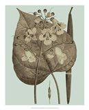Flowering Trees II