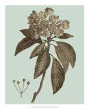 Flowering Trees V