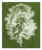 Modern Arbor IV