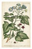 Chambray Botanical I