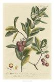 Miller Foliage & Fruit I