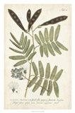 Miller Ferns I