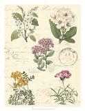 Botanical Journal II