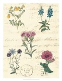 Botanical Journal III