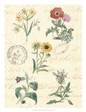 Botanical Journal IV