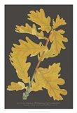 Trees & Leaves IV