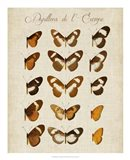 Papillons de L'Europe IV