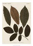 Autumnal Leaves I