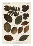 Autumnal Leaves II