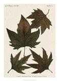 Autumnal Leaves IV