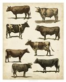 Antique Cow Chart